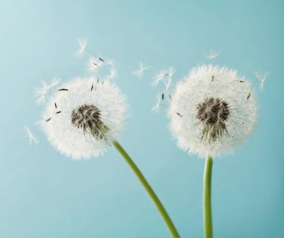 Allergies Still Bad Indoors? - Image 5